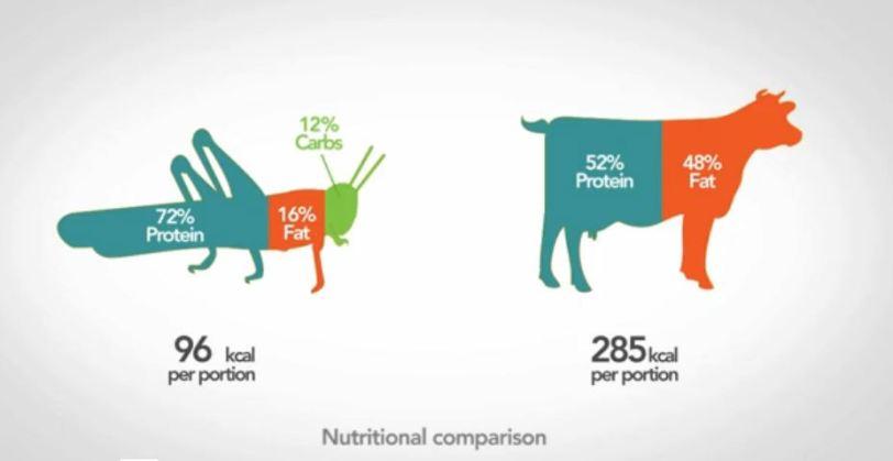 manger_des_insectes_une_alternative_écologique_et_nutritionnelle-2 (1)