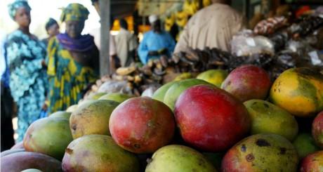 Le Sénégal envisage d'exporter plus de 75.000 tonnes de mangues en 2014 (1/2)