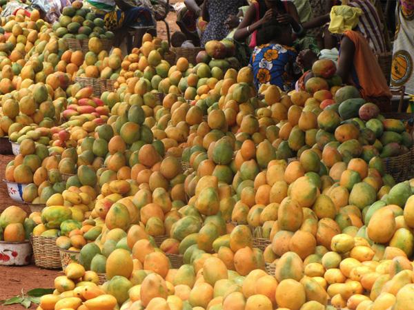 Le Sénégal envisage d'exporter plus de 75.000 tonnes de mangues en 2014 (2/2)