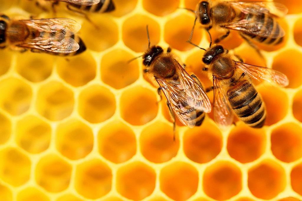 Les bienfaits des diff rents produits de la ruche hlm - La ruche a miel ...
